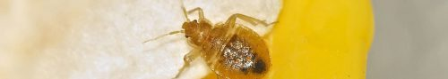 bed bug spraying douglas county or