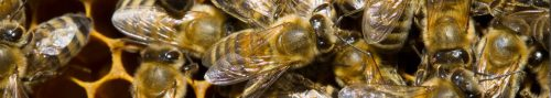 Bee control roseburg or