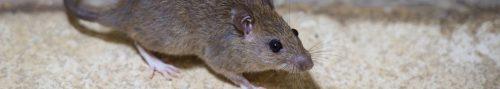 rat control roseburg or