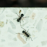pest control ants spraying roseburg or