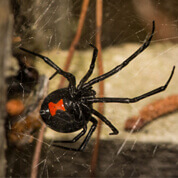 spraying for spiders roseburg or